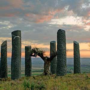 Años 2000 – Árboles como arqueología